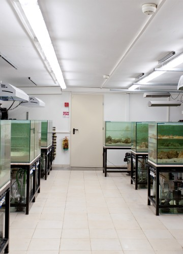 Bar Ilan University – the Laboratory for Molecular Marine Ecology – Coral Facility