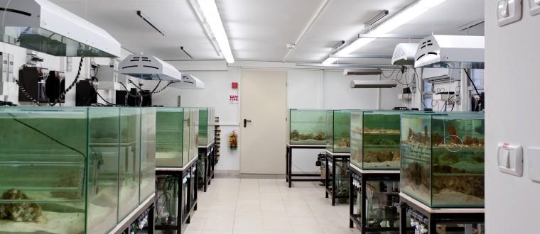 Bar Ilan University – the Laboratory for Molecular Marine Ecology – Coral Facility