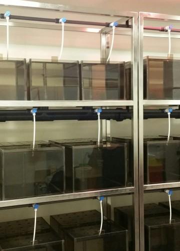 Ben-Gurion University of the Negev – Preclinical Research Service Center – Animal Facility Center – Xenopus Facility