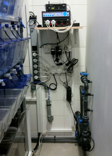 Bar Ilan University – Genetics Of Musculoskeletal Disease Lab – Zebra Fish Facility