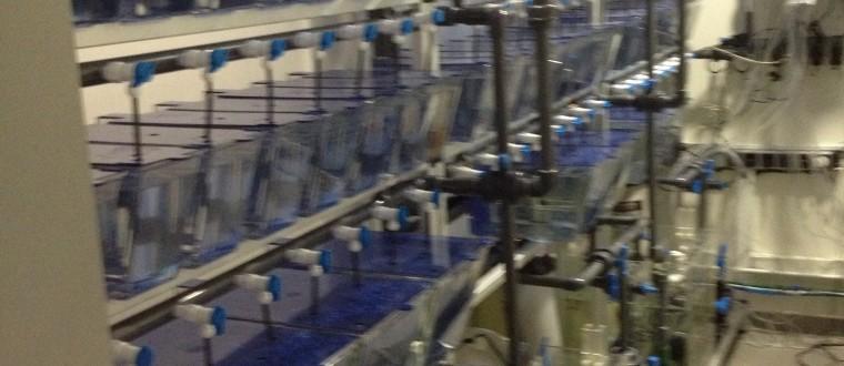 Bar Ilan University – Medical School – Zebra Fish Facility