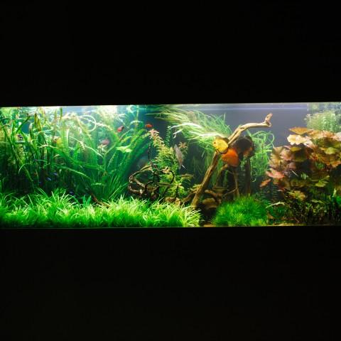 אקווריומים מים מתוקים-צמחייה