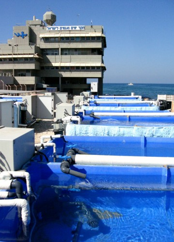 Israel Oceanographic and Limnological Research institute – Mesocosm